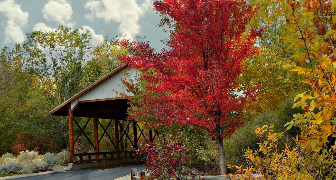 Bartley Ranch Bridge in the fall