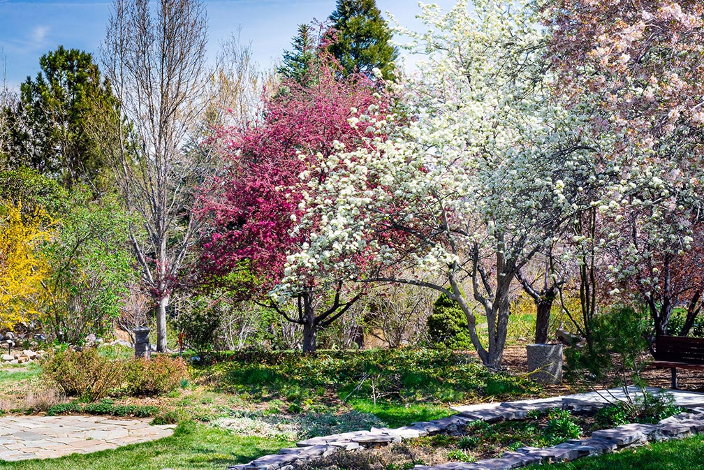 Trees in bloom at Rancho San RafaelPark in Reno