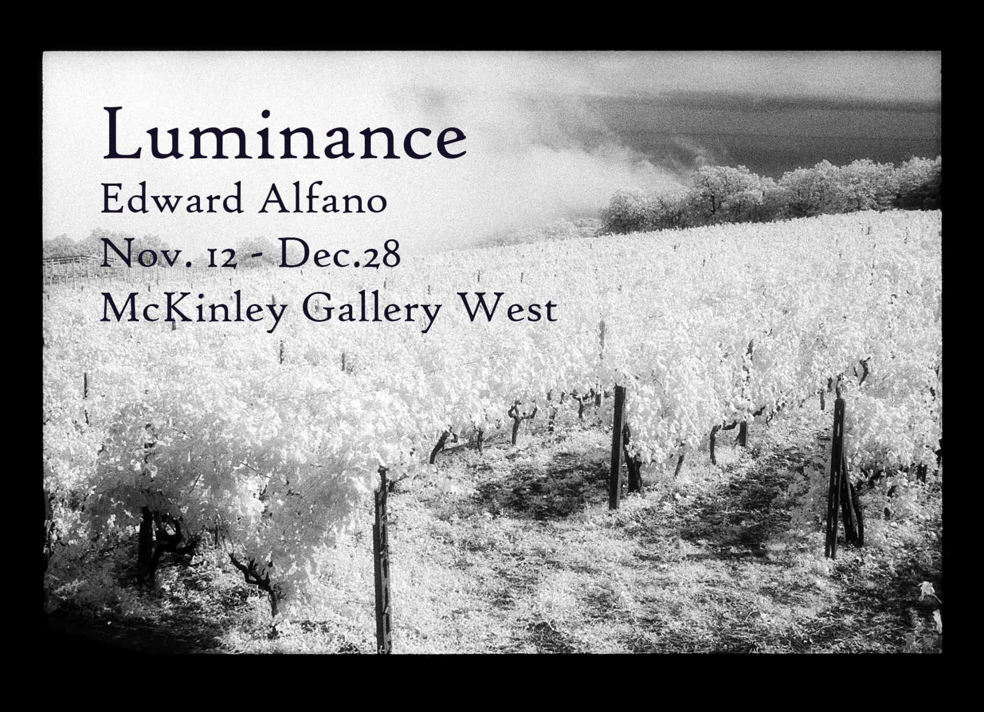 A black and white photograph of a wine vineyard with smoke in the background. Luminance. Photographs by Edward Alfano. November 12 to December 28. McKinley Gallery West. Reception December 6 from 5 to 7 pm.